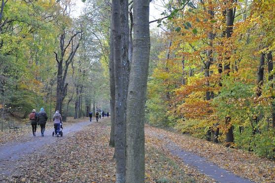 Die Schwarzenbergallee im Erholungsgebiet Schwarzenbergpark in Wien-Hernals.