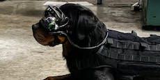 US-Armee will Hunde mit AR-Brillen ausstatten