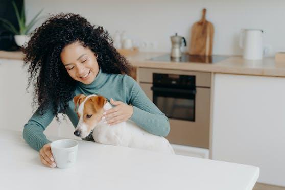 Hunde und Katzen schlemmen gerne. Doch ihre  Neugier kann gefährlich sein.