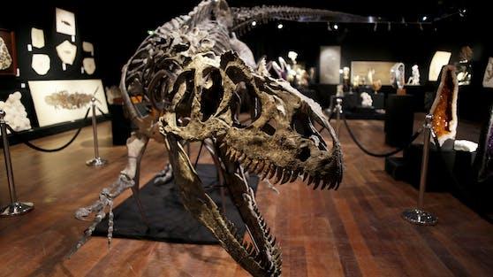150 Millionen Jahre alt, 10 Meter lang, fast 4 Meter hoch - und über 3 Millionen Euro teuer