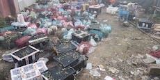 4.000 tote Haustiere in Paketen gefunden
