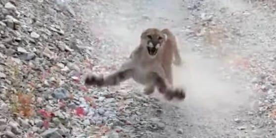 Jogger filmte Puma-Attacke in Utah