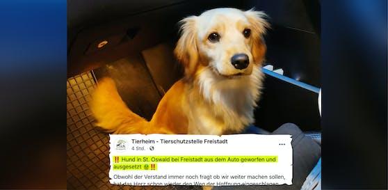 Der Hund wurde in St. Oswald aus dem Auto geworfen.