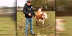 Er tritt noch nach: Dieter vergleicht Wendler mit Kuh