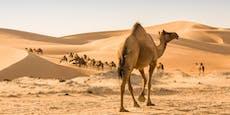 Wie viele Kamele ist deine Freundin wert?
