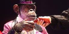 Corona-Impfstoff soll Menschen in Affen verwandeln