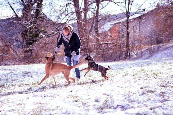 Auch Hundepfoten sollten im Winter gepflegt werden.
