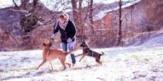 Brennende Risse: Hundepfoten im Winter richtig schützen