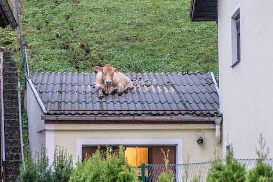 Die Feuerwehr rettete die Kuh, sie blieb nahezu unverletzt.