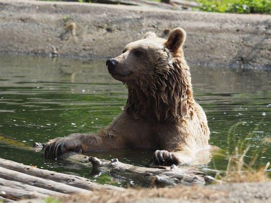 Trauer um Bär Vinzenz