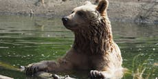 Trauer um Vinzenz – erster Vier-Pfoten-Bär gestorben
