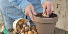 4 Gewächse, die du noch im Oktober pflanzen kannst