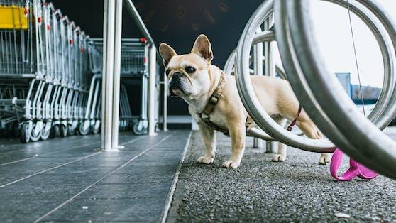 Der Hund war vor einem Supermarkt angeleint. (Symbolfoto)