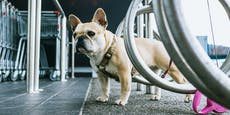 """Diplomatin"" entführt Hund, um andere Frau reinzulegen"