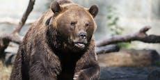 Bären zerfleischen Wildpark-Wärter vor Touristen