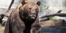 Gesichtserkennung funktioniert auch bei Bären und Kühen