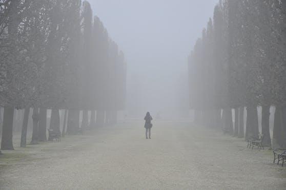 Eine Allee im Schönbrunner Schlosspark versinkt im Nebel.