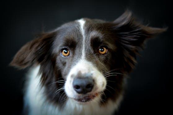 Täter oder Opfer? Auch unsere Haustiere brauchen manchmal Rechtsbeistand.