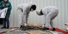Schweine-Kadaver aus Protest vor Kanzleramt aufgebahrt