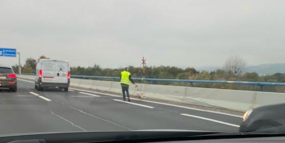 Tierischer Ausflug auf die Nordbrücke