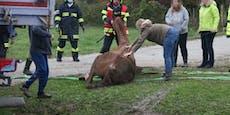 Pferd erschreckt sich und fällt in Straßengraben