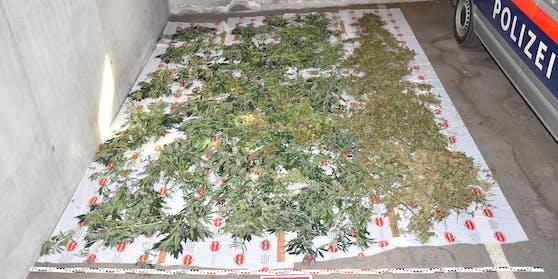 22 Kilo Marihuana wurden beschlagnahmt.