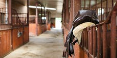 10-Jährige wird von Pferdehuf tödlich am Kopf verletzt
