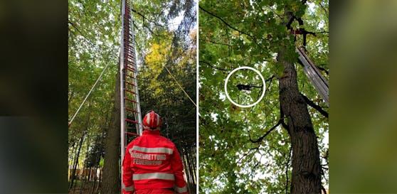 Der Kater musste von der Feuerwehr von einem Baum in 15 Meter Höhe befreit werden.