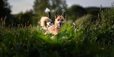 Gift, Durchfall & Co.: Fünf Hausmittel für den Hund