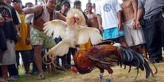 Polizist wird bei Hahnenkampf-Razzia von Tier getötet