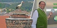 Storch baut Nest auf Wirtshaus, Kellnerinnen schwanger