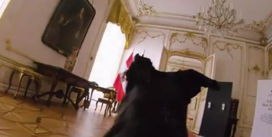 Der Hund von Bundespräsident Alexander Van der Bellen stürmt durch die Hofburg.