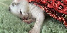 Hilflose Babykatzen zum Sterben in Mülltonne entsorgt