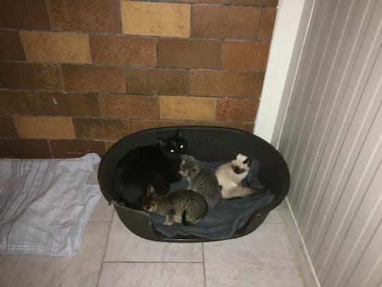 22 Katzen lebten in dem Haus auf engstem Raum zusammen.