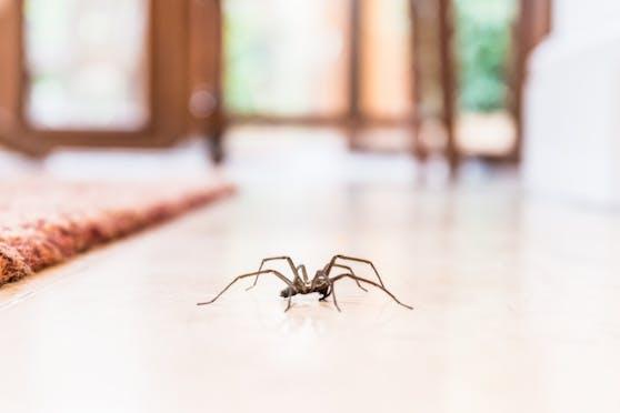 Insekten und Spinnen befinden sich in Europa auf dem Vormarsch.
