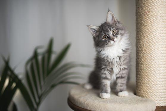 Auch wenn eine Katze nicht reagiert, versteht sie ihren Namen.