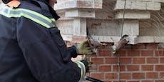 Wiener Feuerwehr befreit zwei Turmfalken aus Gitter