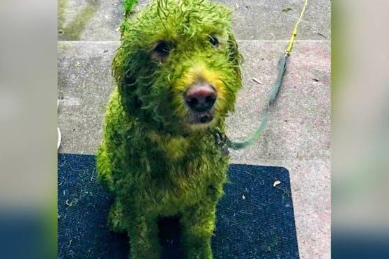 Twitter-User sind irritiert: Alle fragen sich, was diese grüne Färbung ausgelöst hat.