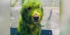 Aufregung im Netz: Warum ist dieser Hund grün?