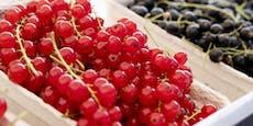 Ribiselmus im Wein – Winzer wegen Betrugs vor Gericht