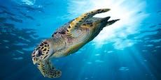Bedrohte Arten auf Rekordniveau