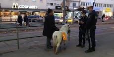 Bettel-Pony könnte nun Platz im Tierheim bekommen