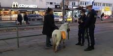 Tierschützer machen gegen Wiener Zirkus mobil