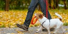 Kommt bald Halbierung der Hundesteuer?