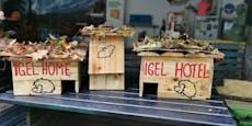 Verein baut Winterquartiere für Igel und Fledermäuse