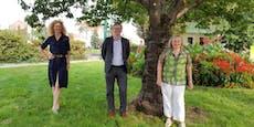 Hietzinger Verein kämpft gegen die Verbindungsbahn