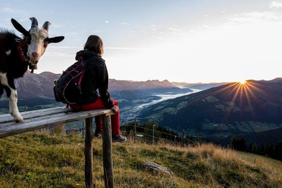 Eine Wanderin blickt in die über der Planai aufgehende Sonne und ins Ennstal. Den Ziegenbock interessiert etwas anderes