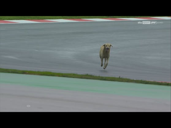 Ein Hund hat sich auf die Strecke verirrt.