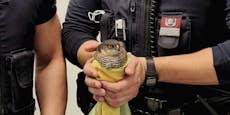 Polizisten retten abgestürzten Sperber in Wien