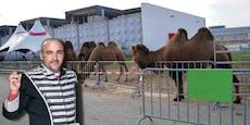 Zirkusdirektor erklärt, warum Kamel zugebissen hat